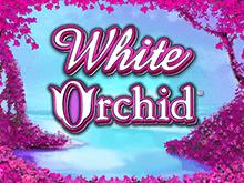 Аппарат Белая Орхидея от IGT Slots - зарабатывай деньги, проводя досуг весело